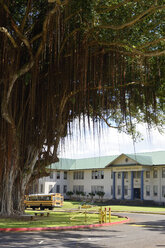 USA, Hawaii, Big Island, Hilo, view to school and parked school bus with Indian banyan in the foreground - BRF000961