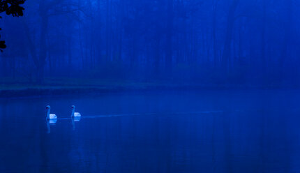 Germany, Bavaria, Swans on lake at night - FCF000592