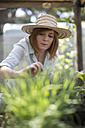 Portrait of female gardener looking at seedlings - ZEF004068
