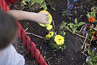 Boy watering plants - ZEF004077
