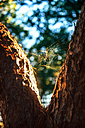 Spain, Andalusia, Huelva, cobweb between two tree trunks at nature park - EH000033