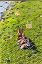 Austria, Salzburg, love padlocks at Makartsteg - AM003571