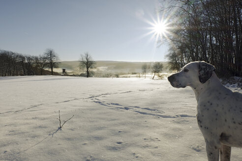 Germany, Bergisches Land, dog in winter landscape - ONF000752
