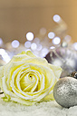 Silver Christmas bauble and rose blossom on artifical snow - JUNF000162