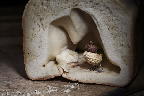 Peanut bird hiding in bread cave - NIF000028