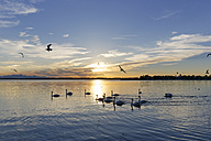 Germany, Bavaria, evening at Chiemsee - SIEF006341