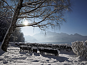 Germany, Kochel am See, snow-covered benches at Lake Kochel - LAF001378