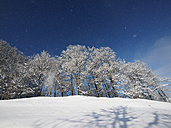 Germany, Kochel am See, snow-covered trees - LAF001383