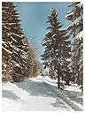 Germany, Constance district, winter landscape - ELF001427