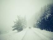 Germany, Constance district, winter landscape - ELF001431
