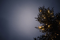 Germany, Bavaria, Ramsau, illuminated tree - MJ001436