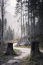Germany, Bavaria, Ramsau, forest path - MJF001443