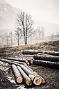 Germany, Bavaria, Ramsau, logs on meadow - MJF001452