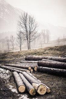 Germany, Bavaria, Ramsau, logs on meadow - MJF001452