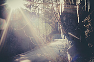Germany, Bavaria, Berchtesgadener Land, sunbeam on rural road through forest - MJF001458