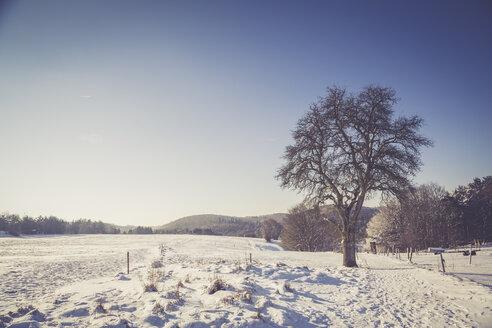 Germany, Kaiserslautern district, Palatinate Forest, winter landscape near Trippstadt - LVF002538