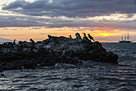 Ecuador, Galapagos Islands, Isabela, blue-footed boobies on rock at sunset - FOF007352