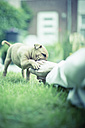 Playful puppy biting foot on a meadow - NNF000335