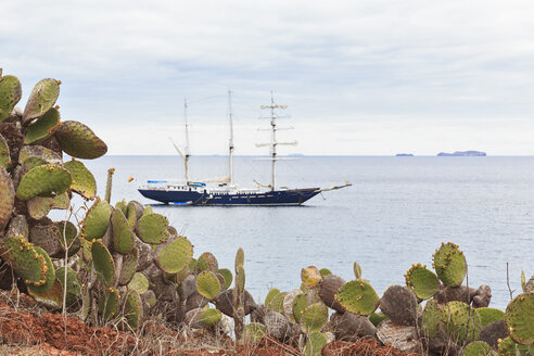 Pacific Ocean, sailing ship at Rabida Island with Opuntia echios, Galapagos Islands - FOF007555