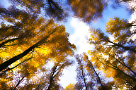 Germany, Forest in autum against the sun - JTF000616