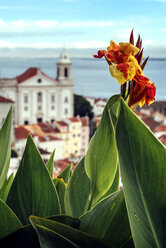 Portugal, Lisbon, flower in front of Alfama neighborhood - EHF000109