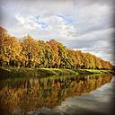 Germany, Decksteiner Weiher, chestnut trees in autumn - GWF003601