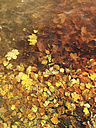 Autumn leaves in water - GWF003602