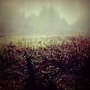 Germany, Wuppertal, flowers in fog - DWI000375