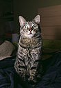 Portrait of tabby cat with eyes wide open - RAEF000008