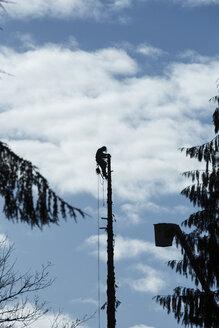 Canada, North Vancouver, Woodsman cutting trees - NG000168