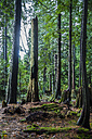 Canada, North Vancouver,  Trees in forrest - NGF000170