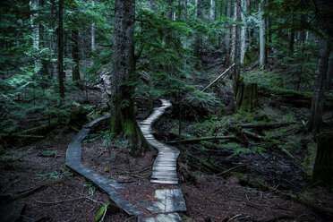 Canada, North Vancouver, Forrest trail in North Vancouver - NGF000182
