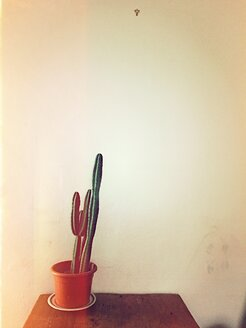 Cactus on wooden table - VRF000142