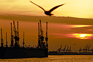 Germany, Hamburg, seagull at harbor at sunset - KRPF001224