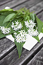 Blossoms and leaves of wild garlic - GWF003595