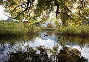 Austria, Abtenau, Egelsee, Lammertal - WWF003373