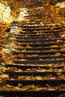 Germany, stairs with autumn leaves - JTF000624