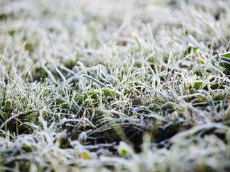 Germany, frozen grass in winter - KRPF001184