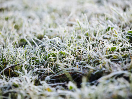 Germany, frozen grass in winter - KRPF001184