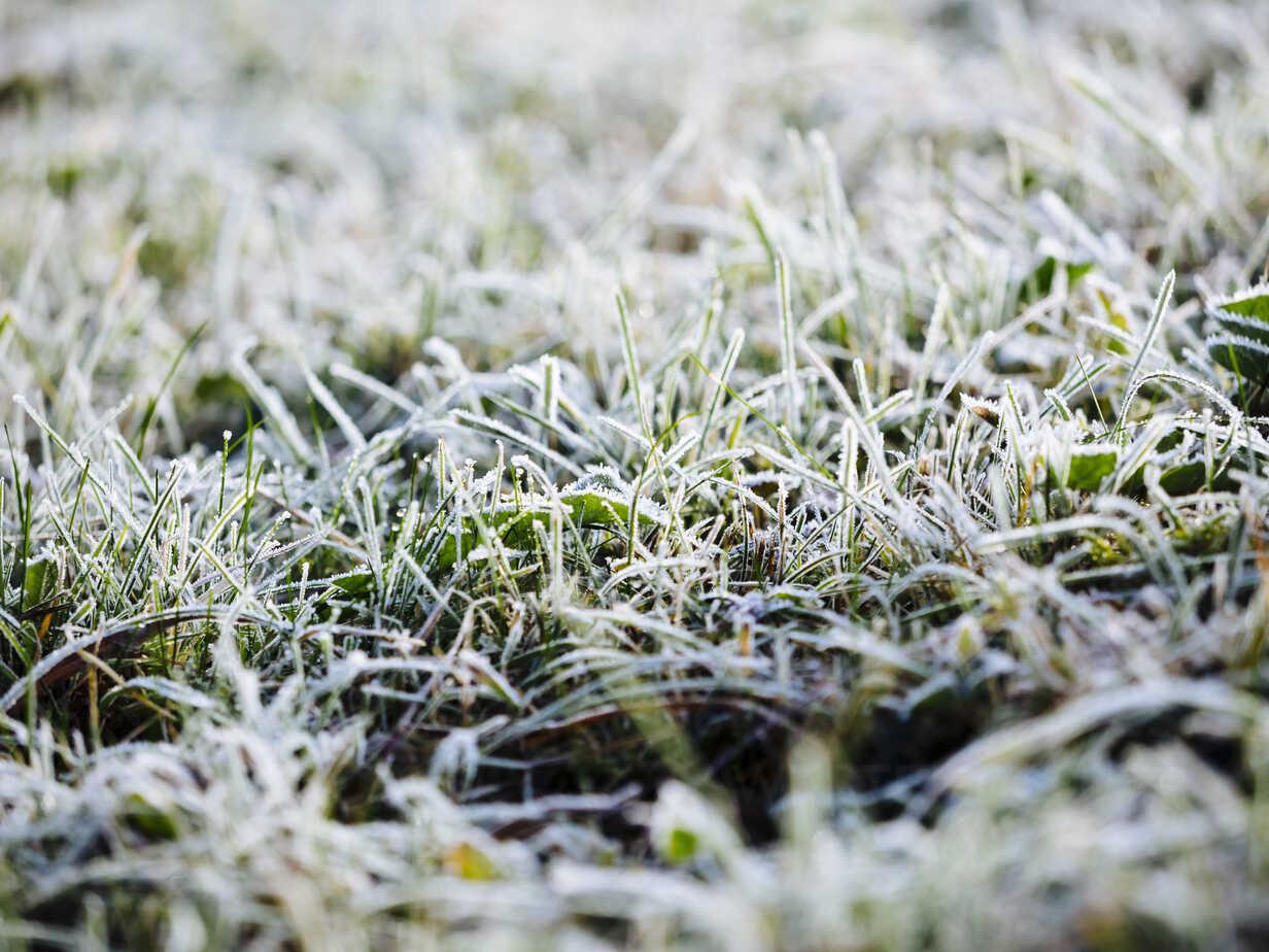 Germany, frozen grass in winter - KRPF001184 - Kristian Peetz/Westend61