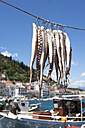 Greece, Gythio, squid hanging to dry in harbor - WWF003519