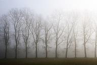 Austria, Mondsee, row of bare trees in morning mist - WWF003458
