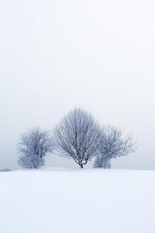 Austria, Mondsee, snow-covered winter landscape - WWF003590