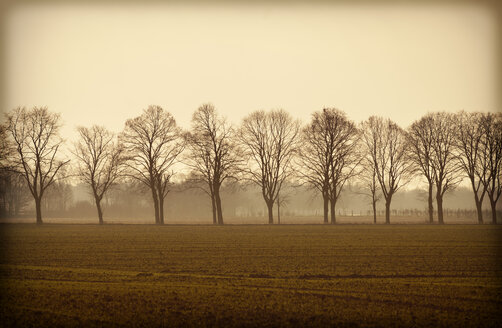 Germany, alley of bare trees - GUFF000090