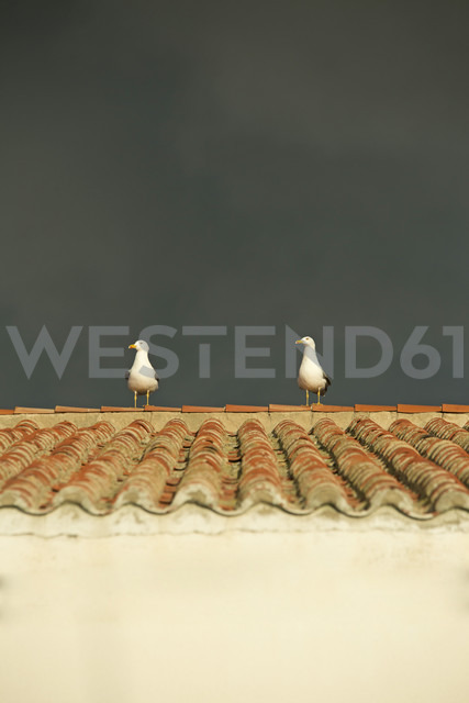 Spain, Andalusia, Tarifa, two seagulls on rooftop - KBF000309