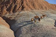 USA, Wyoming, six galloping wild horses - RUEF001461