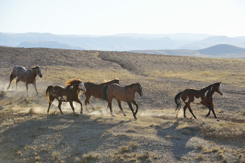 USA, Wyoming, five wild horses running in badlands - RUEF001471