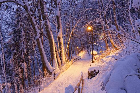 Germany, Bavaria, Wolfratshausen, illuminated path in winter forest - SIEF006455