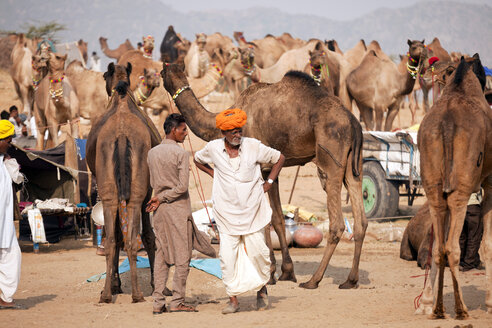 India, Rajasthan, Pushkar, camel and livestock fair - PC000061