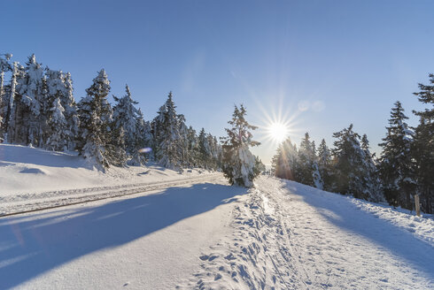 Germany, Saxony-Anhalt, Harz National Park, hiking trail in winter, against the sun - PVCF000269